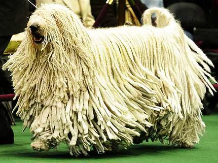 hairiest-animal-species-01.jpg